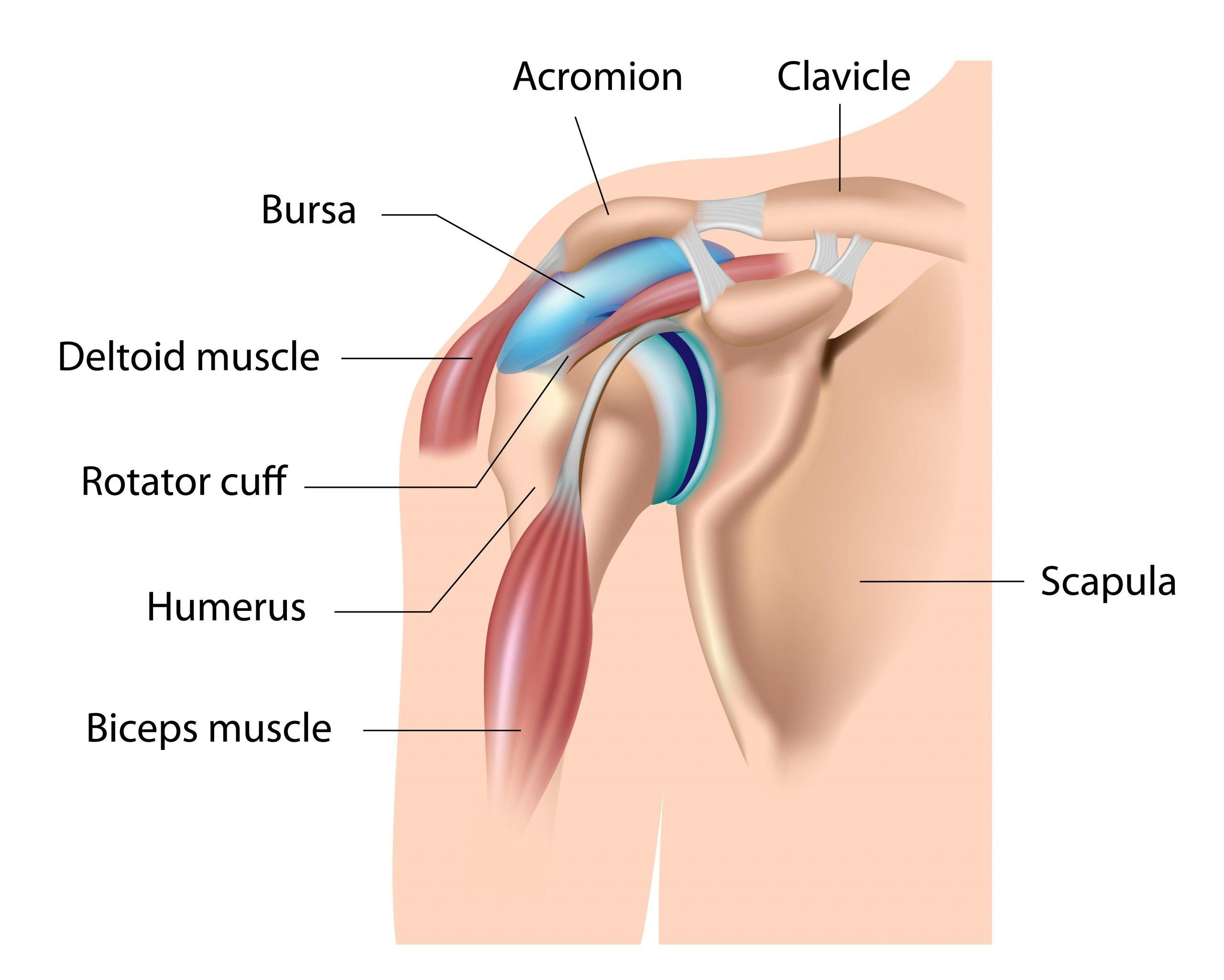 Shoulder Arthritis: Treatment for Younger, Active Patients
